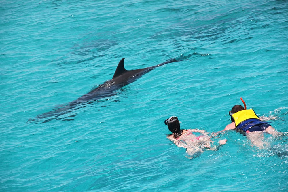 dolphin adventure hurghada