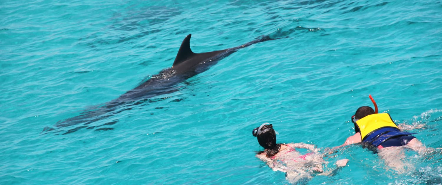 dolphin boat tour